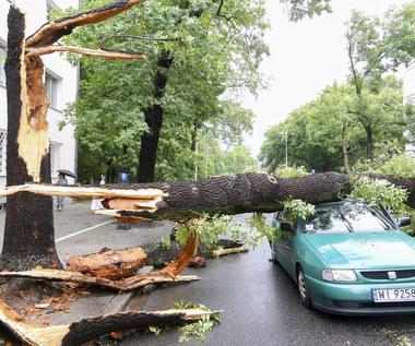 Drzewo zmiażdży ci samochód i nie dostaniesz ani grosza