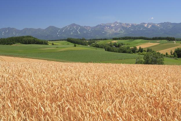 Dużą sezonowość na rynku ziemi rolnej można tłumaczyć warunkami pogodowymi /© Panthermedia