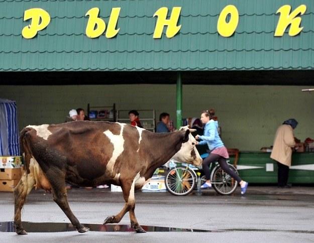 Duża szansa na wschodni rynek? /AFP