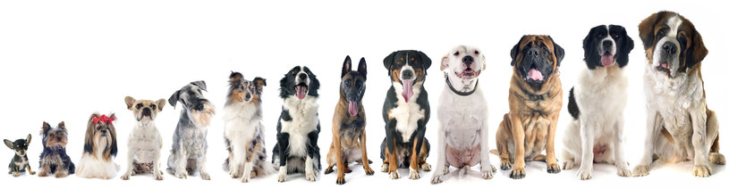 Duże psy niekoniecznie nie są odpowiednie dla rodzin z dziećmi /123RF/PICSEL