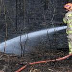 Duże zagrożenie pożarami lasów w czterech województwach