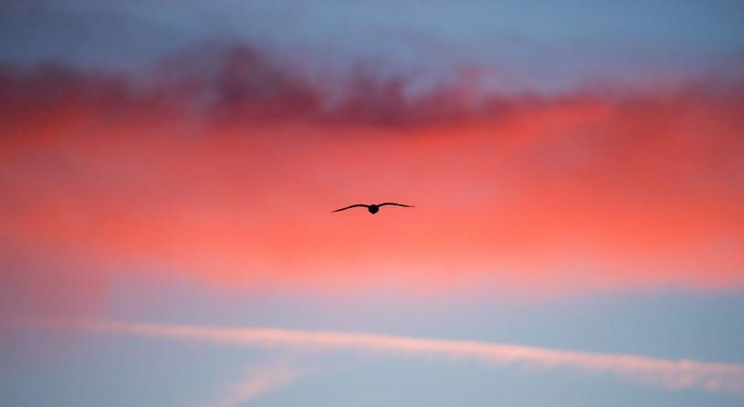 Dużo pogodnego nieba i ciepło j ak na grudzień - takie są  prognozy /PAP/EPA