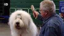 DW Premium News: Brexit. Koniec brytyjskich ras psów w UE?