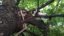 DW Premium News: Kot, ktróry zamieszkał na drzewie