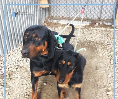 Dwa psy odnalezione na Hali Gąsienicowej. TPN szuka właścicieli