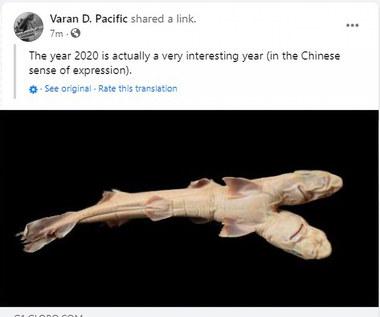 Dwugłowy rekin. Pierwszy taki okaz na świecie