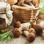 Dynamiczny wzrost rynku grzybów w Polsce