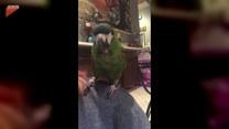Dyskusja kobiety z papugą. O co poszło?