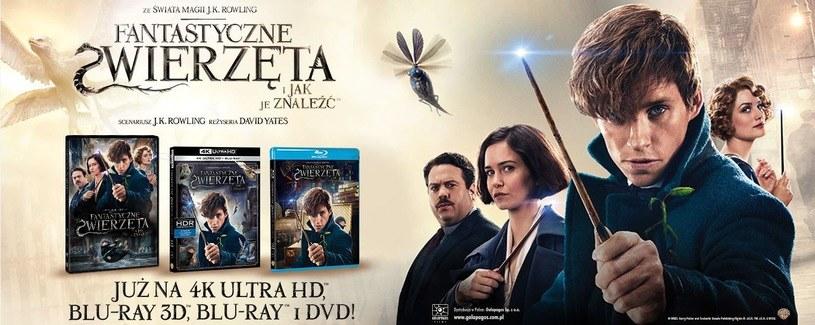 """Dystrybutorem filmu 'Fantastyczne zwierzęra i jak je znaleźć"""" na płytach 4K Ultra HD Blu-ray, Blu-ray 3D, Blu-ray i DVD jest Galapagos Films /materiały dystrybutora"""