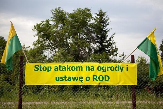 Działkowcy nie muszą obawiać się wyroku trybunału, fot. Karol Serewis /East News