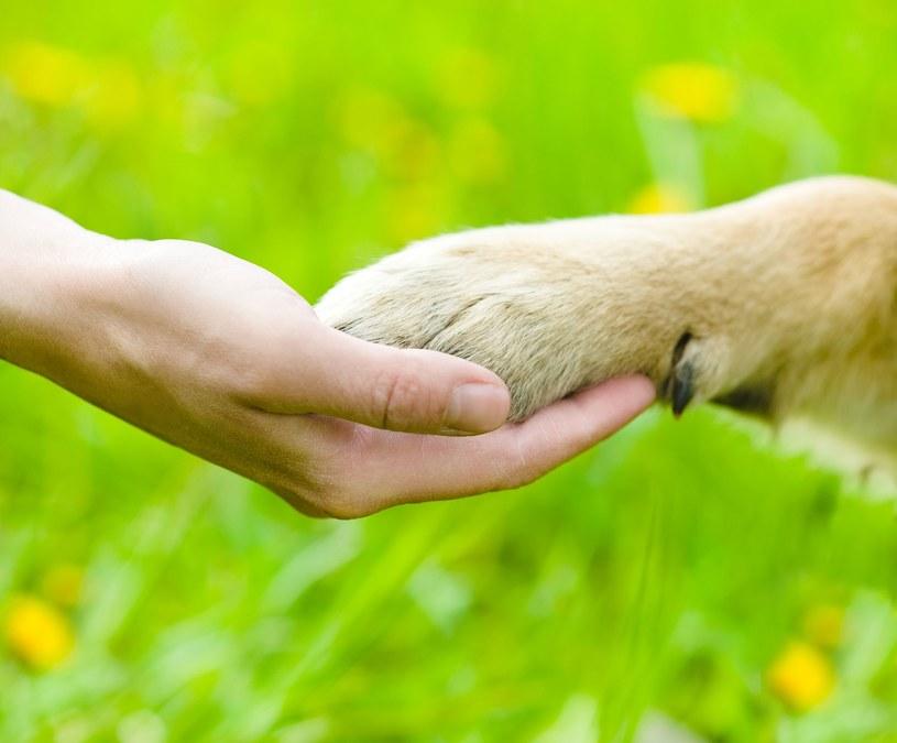 Dzieci chętnie pomagają zwierzętom /123RF/PICSEL