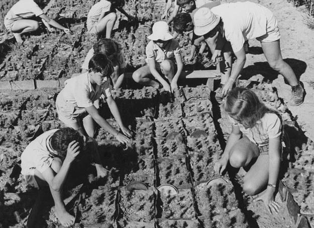 Dzieci pracujące w ogrodzie. Pustynia Negew, 1950 /Getty Images/Flash Press Media