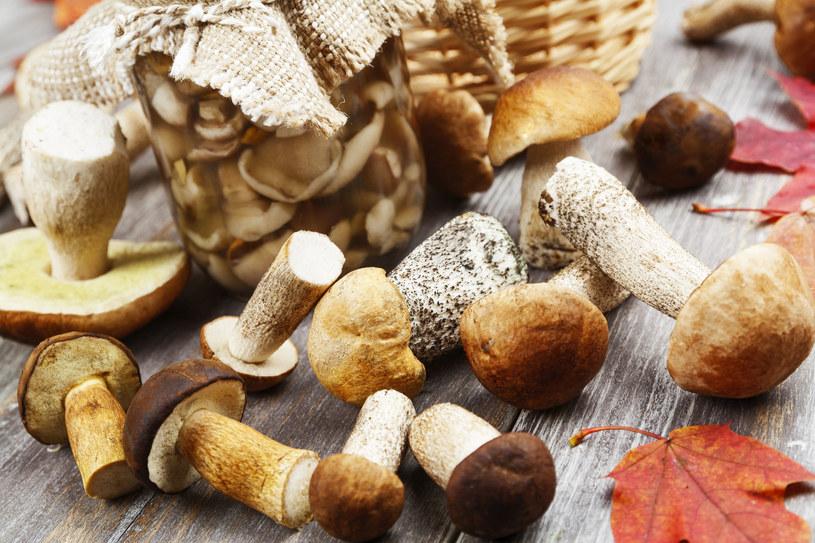 Dzieci uwielbiają grzyby zbierać. Jeść już niekoniecznie. To dobrze, bo nie są to przysmaki dla nich /123RF/PICSEL