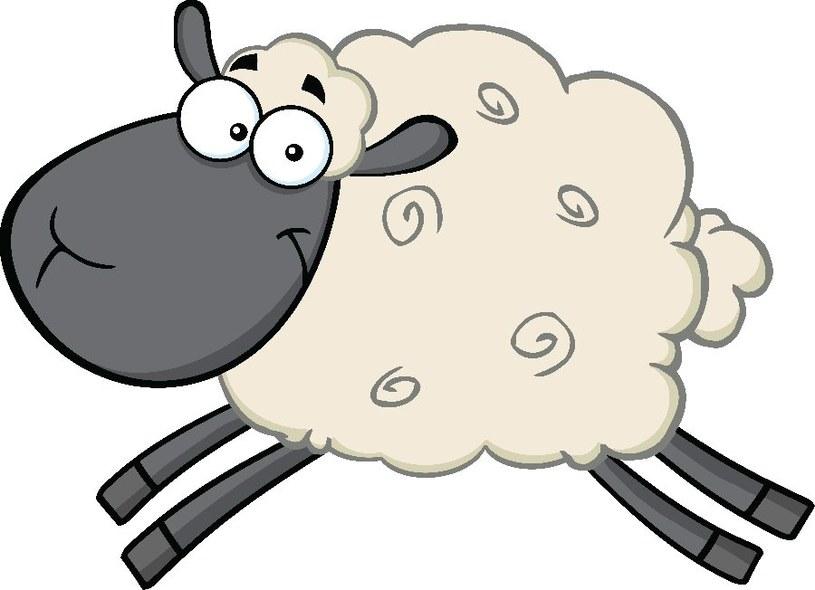 Dzieciaki lubią owieczki /©123RF/PICSEL