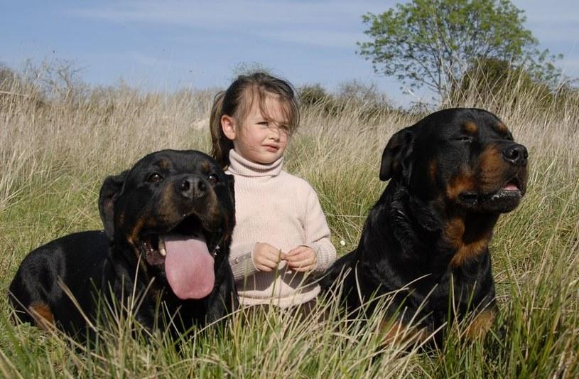 Dziecko a groźne psy /©123RF/PICSEL