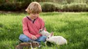 Dziecko i domowy pupil – czy da się to pogodzić?