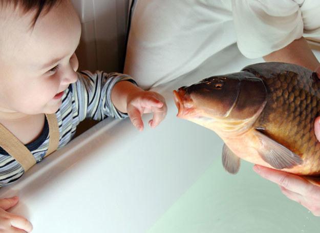 Dziecko może zjeść kawałek ryby gotowanej na parze. /123RF/PICSEL