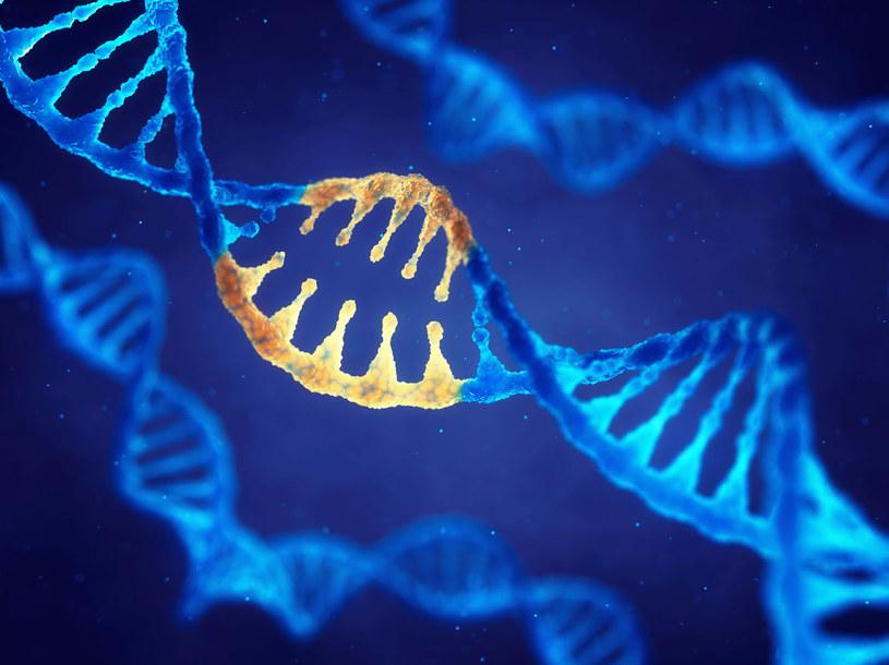 Dzięki technice CRISPR/Cas9 moż usunąć z organizmu wirusa HIV /123RF/PICSEL