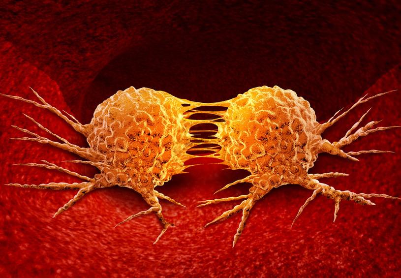 Dzielące się komórki rakowe /123RF/PICSEL
