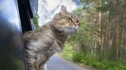 Dziesięć ciekawych faktów o kotach