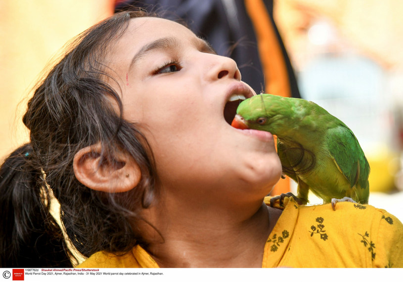 Dziewczynka ufa swojej papudze /Shaukat Ahmed/Pacific Press/Shutterstock /East News