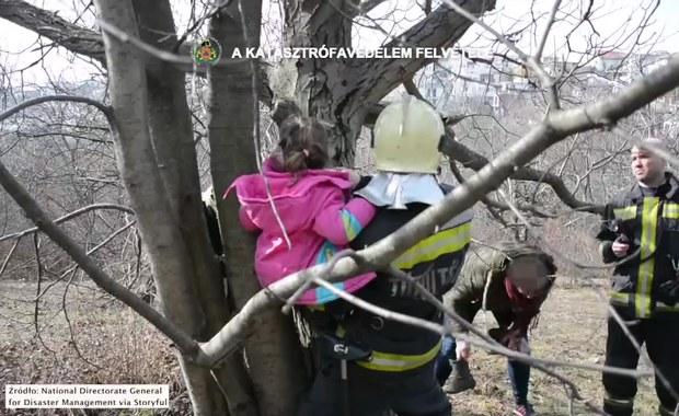 Dziewczynka zaklinowała się między konarami. Uratowali ją strażacy