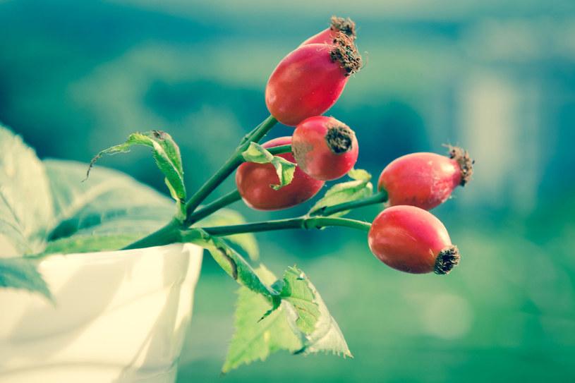Dzika róża /123RF/PICSEL