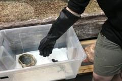 Dziś Dzień Miłośników ZOO! Zobacz nowych, jadowitych mieszkańców wrocławskiego zoo