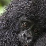 Dziś Dzień Zagrożonych Gatunków. Zobacz przepiękne zdjęcia zwierząt!