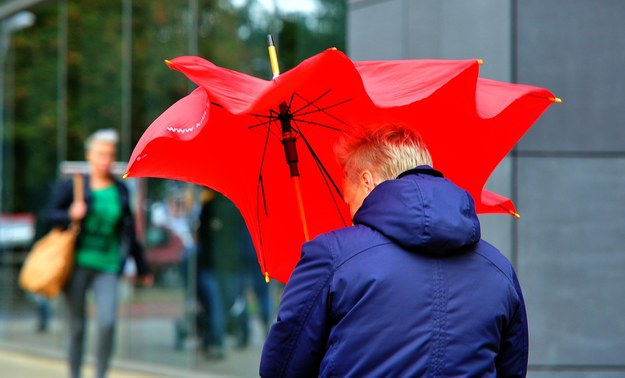 Dziś ma mocno wiać w 12 województwach / Marcin Bielecki    /PAP