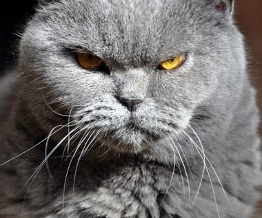 Dziwne zachowanie u kota. Co może ono oznaczać?