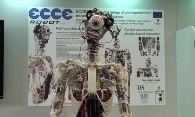 ECCE Robot jest dziełem szwajcarskich inzynierów /Internet