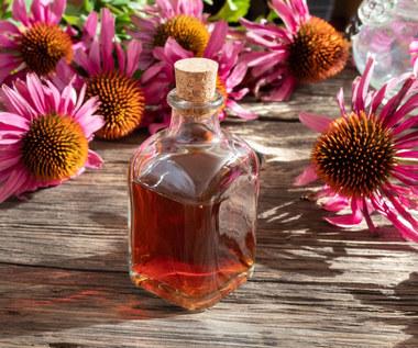 Echinacea: Właściwości i zastosowania