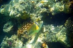Egipt kusi amatorów nurkowania