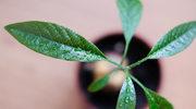 Egzotyczne rośliny z własnego ogródka? To możliwe!