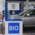 Ekolodzy nie chcą... biopaliw!