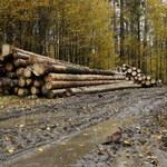 Ekolodzy o wyroku ws. Puszczy Białowieskiej: Gorzka lekcja dla ministra środowiska
