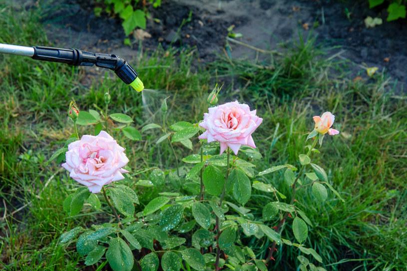 Ekologiczne opryski na mszyce mogą sprawdzić się także w przypadku skoczka różanego /123RF/PICSEL