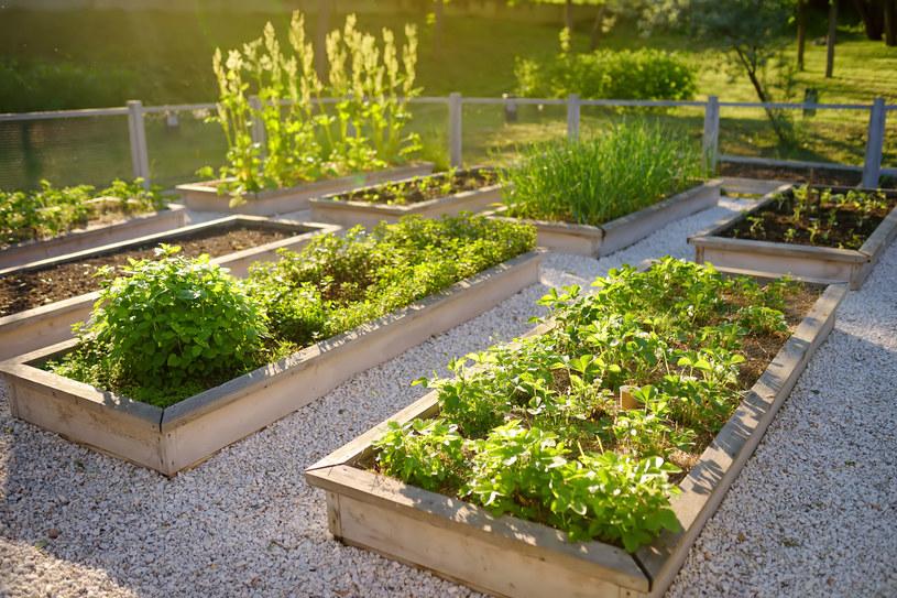 Ekologiczne warzywa z przydomowego ogródka niestety kosztują /123RF/PICSEL