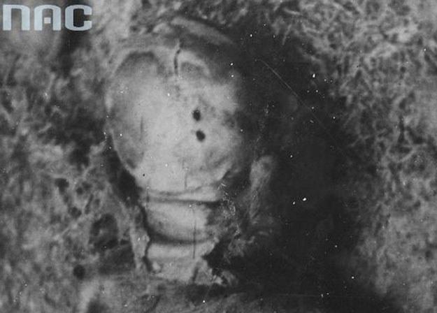 Ekshumowane zwłoki ofiary NKWD. Widoczne otwory wlotowe pocisków w tyle czaszki /Z archiwum Narodowego Archiwum Cyfrowego
