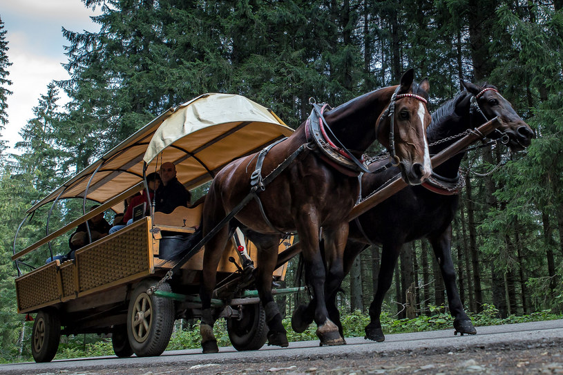 Eksperci, którzy z nami współpracują, uważają, że konie wcale nie mają się źle - mówi Szymon Ziobrowski - /Michal Wozniak /East News