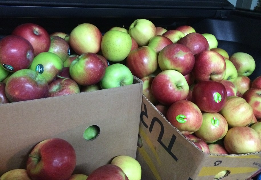 Eksperci prognozują, że zbiory jabłek wyniosą 2,3-2,6 miliona ton, czyli o milion ton (ponad 30 procent) mniej niż w ubiegłym roku /Kuba Kaluga /Archiwum RMF FM