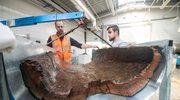 Eksperci z Torunia pracują nad konserwacją niezwykłego znaleziska