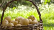 Ekspert radzi: Ziemniaki
