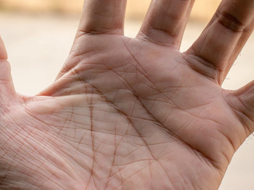 Ekspertom wystarczy rzut oka na dłoń, by opisać naszą przyszłość /123RF/PICSEL
