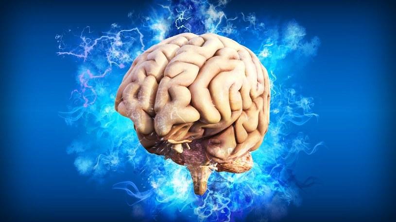 Eksperymentalne mózgi z laboratorium dojrzewają w taki sam sposób, jak u noworodka /Geekweek