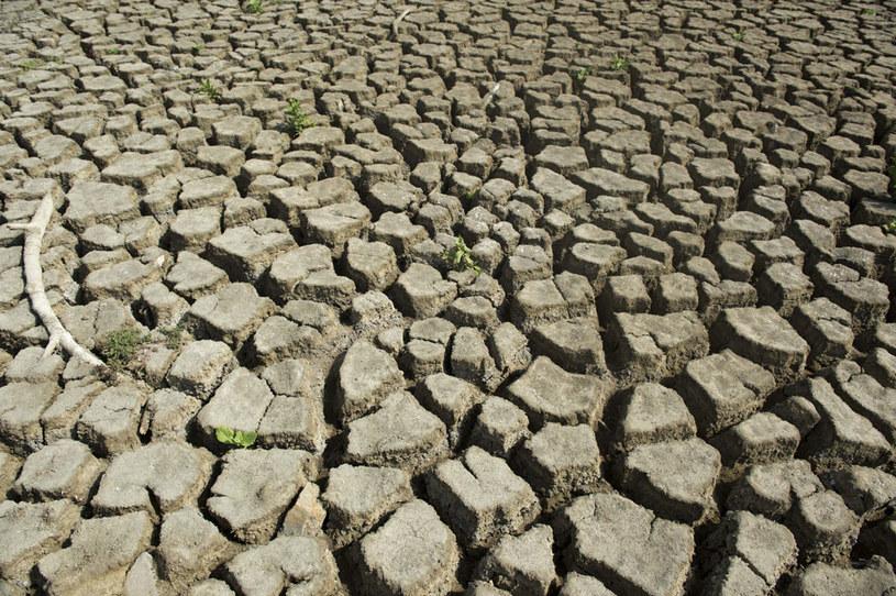 El Niño m.in. powoduje susze fot. Eitan Abramovich /AFP
