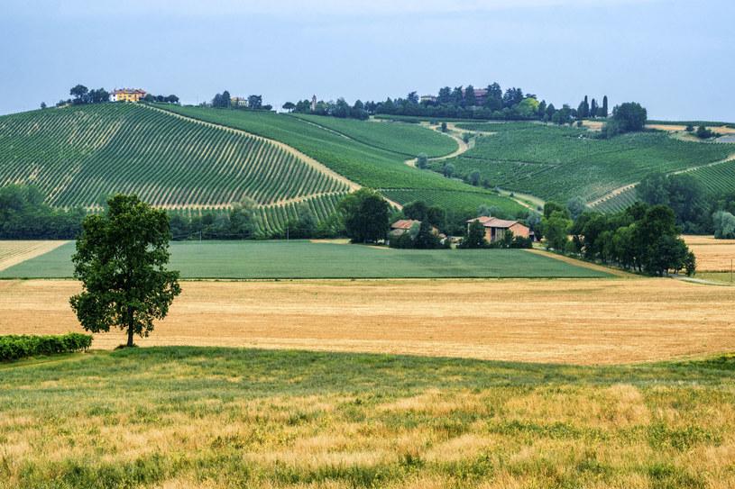 Emilia Romania jest jednym z najbardziej żyznych terenów we Włoszech /123RF/PICSEL
