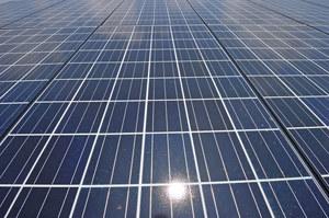 Energetyka słoneczna szkodzi bioróżnorodności