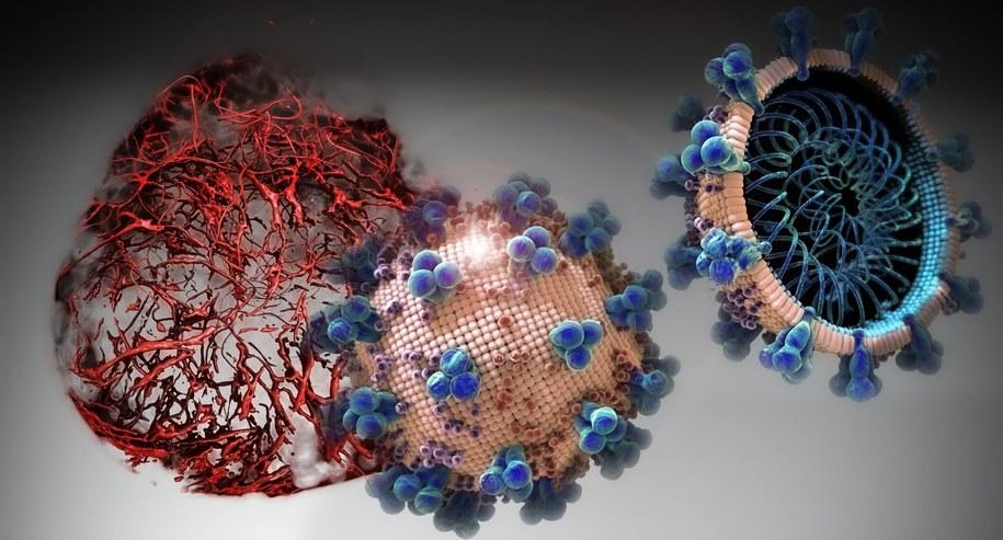 Enzym hrsACE2 blokuje wnikanie koronawirusa do ludzkich komórek /IMBA/Tibor Kulcsar /Materiały prasowe